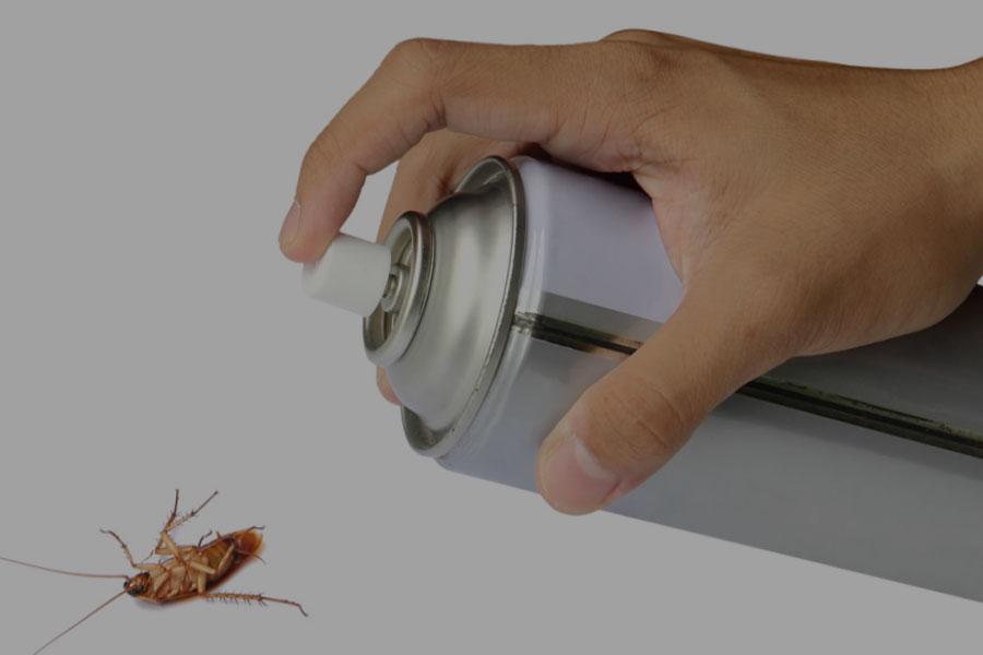 usuwanie robaków